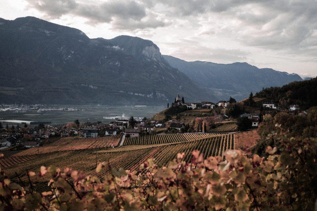 Výhled na vinice