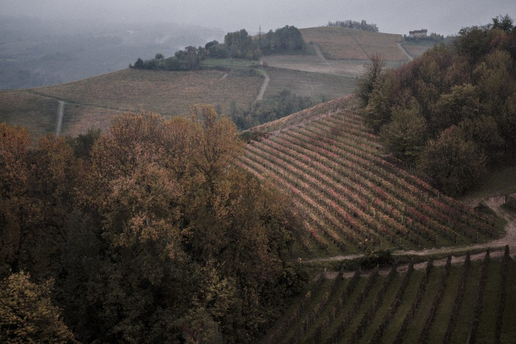 Cesta za vínem