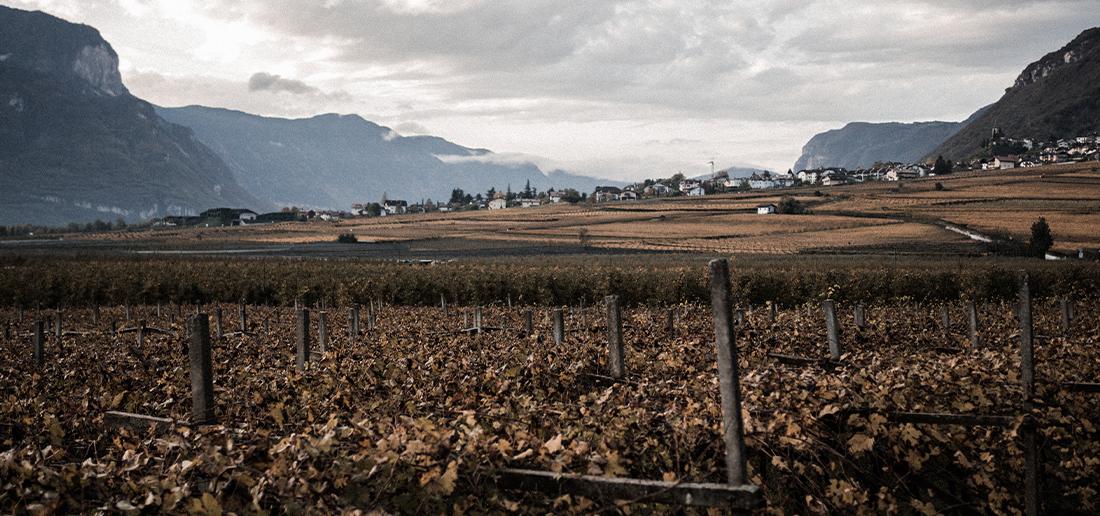 Cesty za vínem